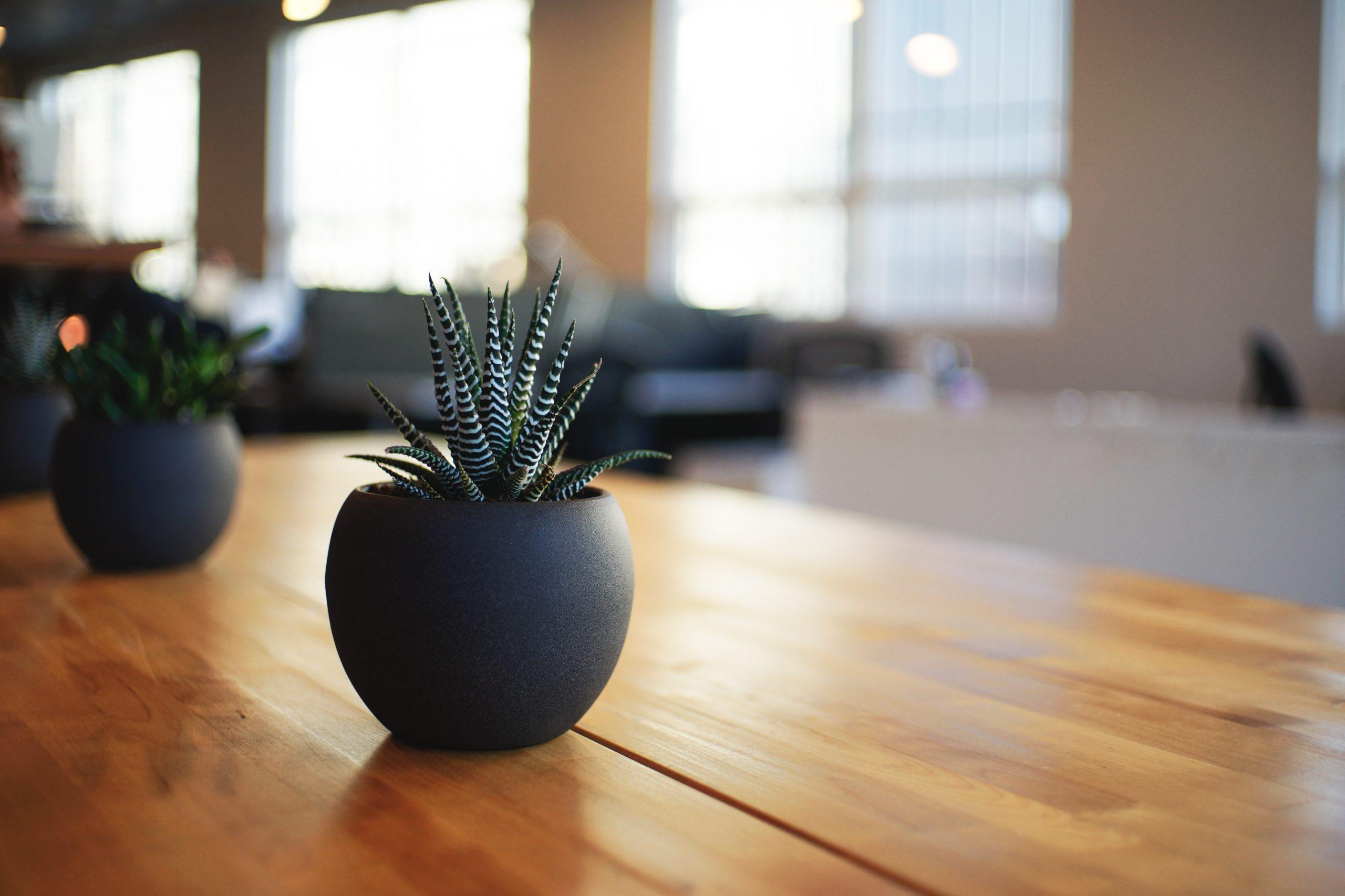 Pflanzen und Blumen im Büro Wien